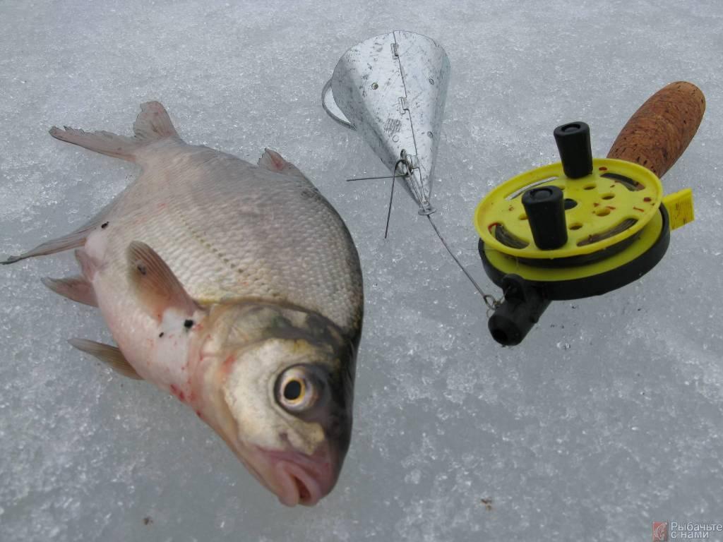 Ловля леща зимой: выбор снасти и оснастки для рыбалки со льда