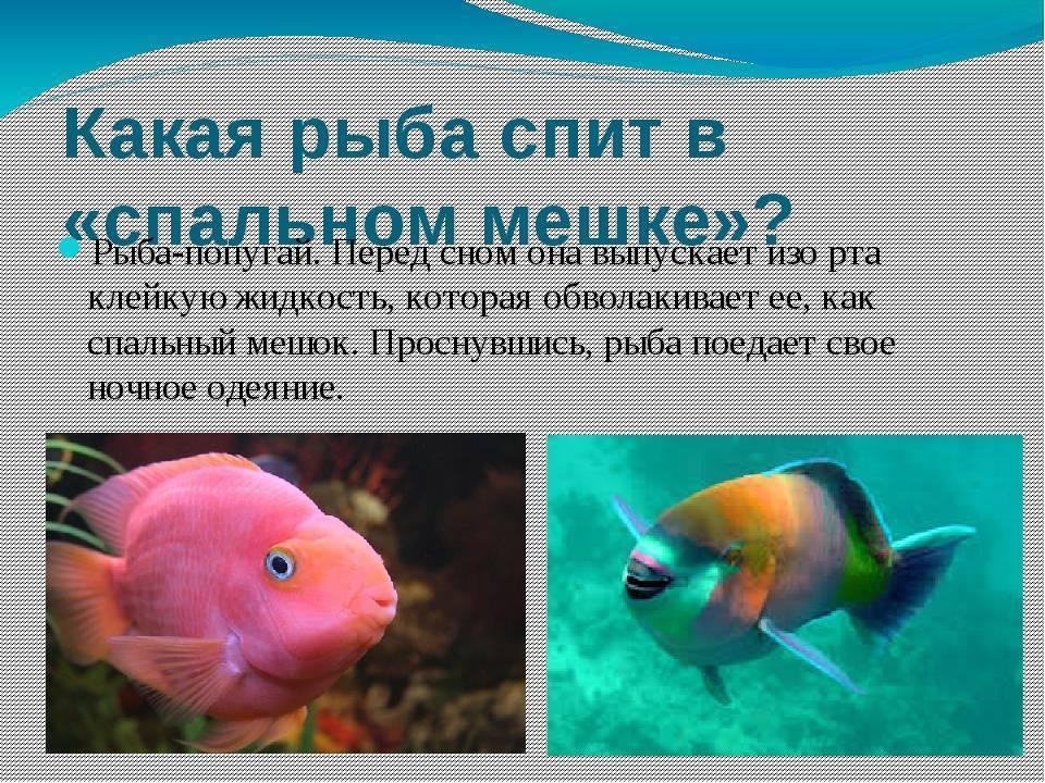 Рыбки спят, они устали. как рыбы спят? как спят рыбы в аквариуме - лечение