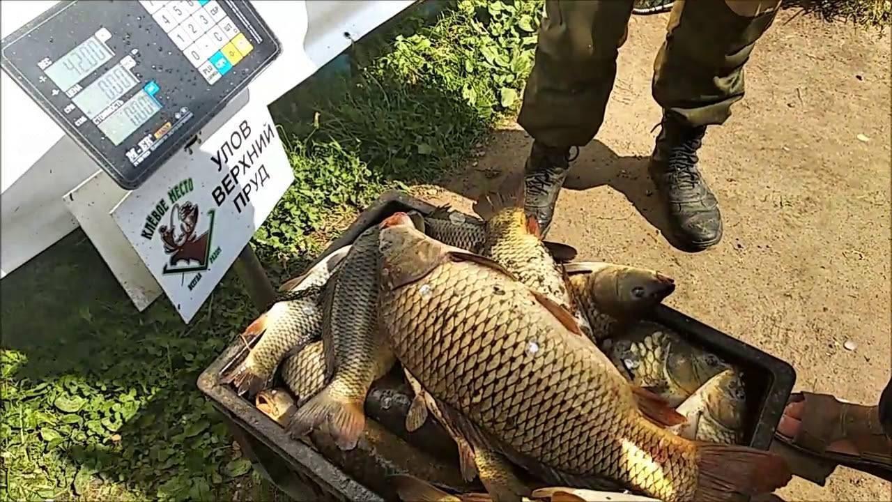 Платная рыбалка в «клевом месте» на лосином острове