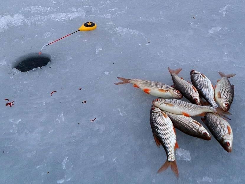 Ловля окуня в феврале: где ловить окуня в феврале, как ловить. обсуждение на liveinternet