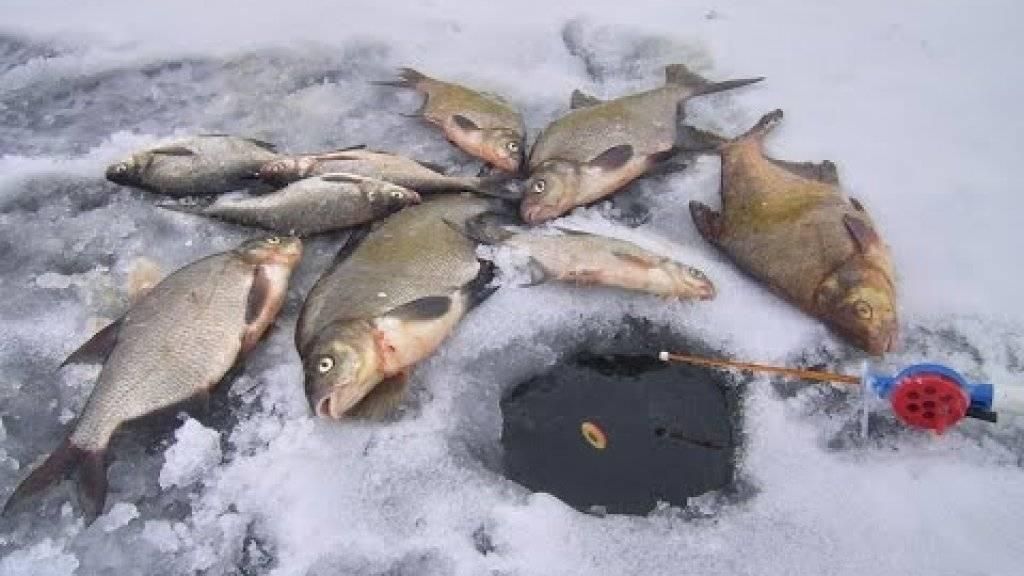 Ловля густеры на поплавочную удочку и на фидер: на что и где ловить густеру
