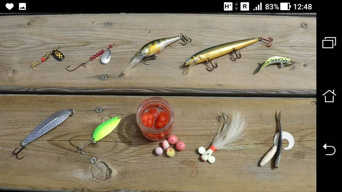 Где и на что ловить чехонь - на рыбалке!