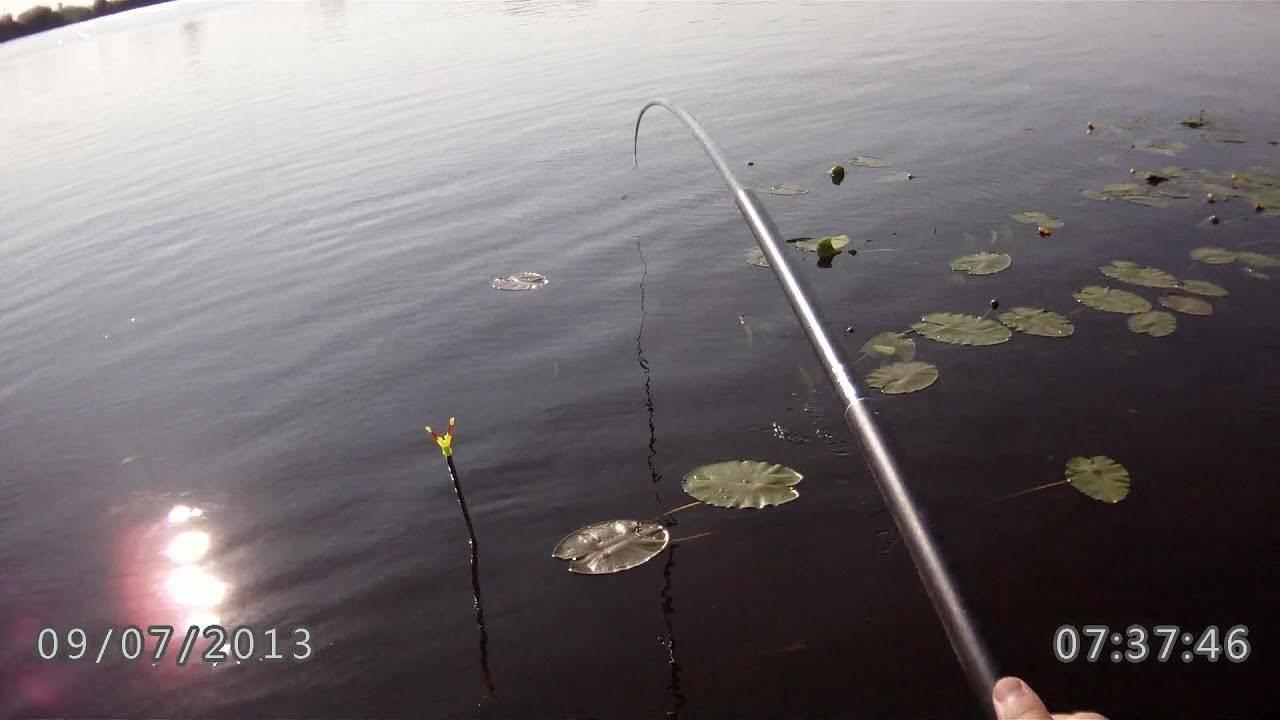 Щука в ноябре - особенности лова, где и на что ловят, советы рыбакам