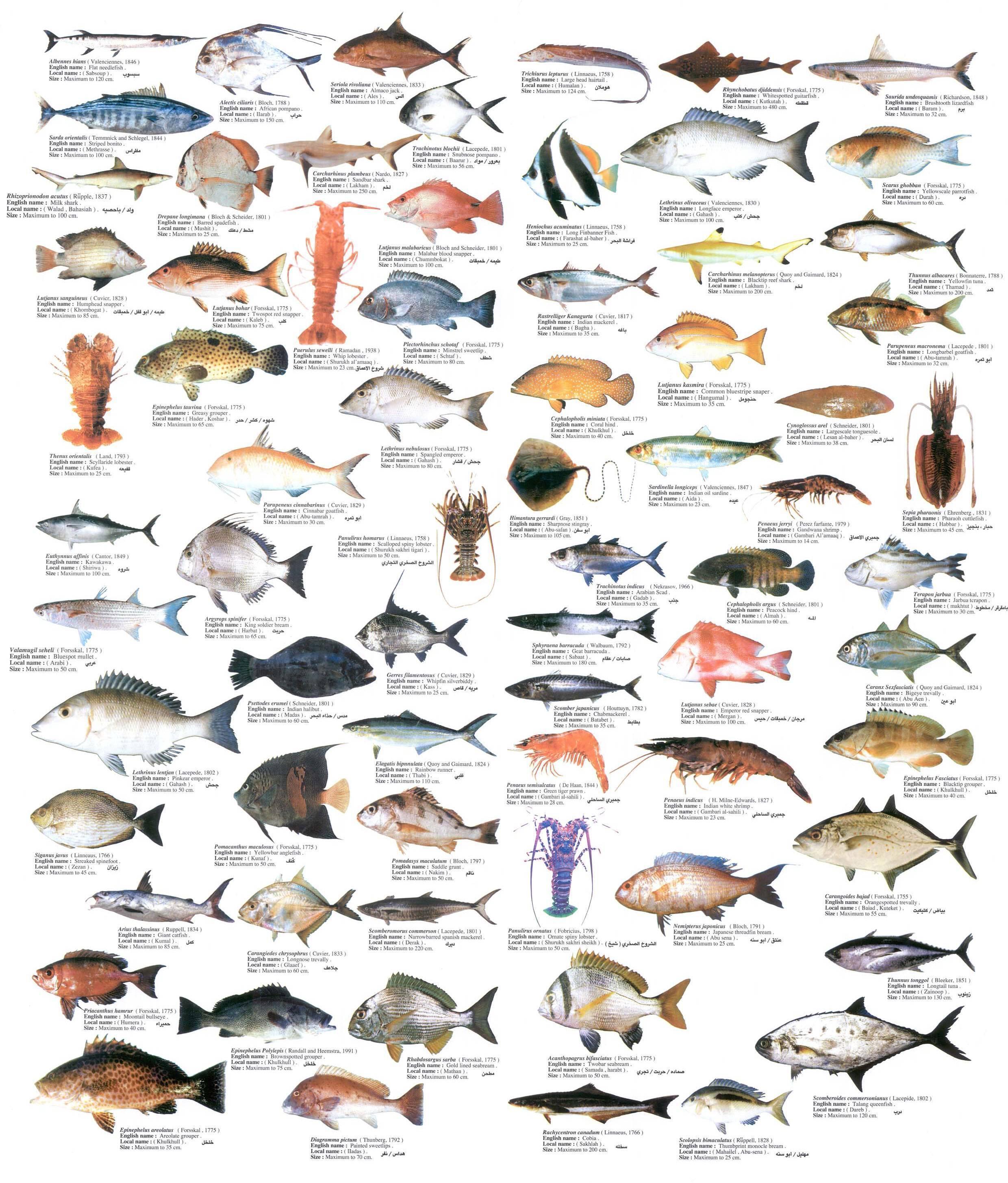 Нежирная рыба — список всех сортов для диетического питания