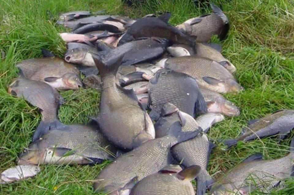 Водоёмы подмосковья для бесплатной рыбалки - места для ловли летом, весной, осенью и зимой, видео