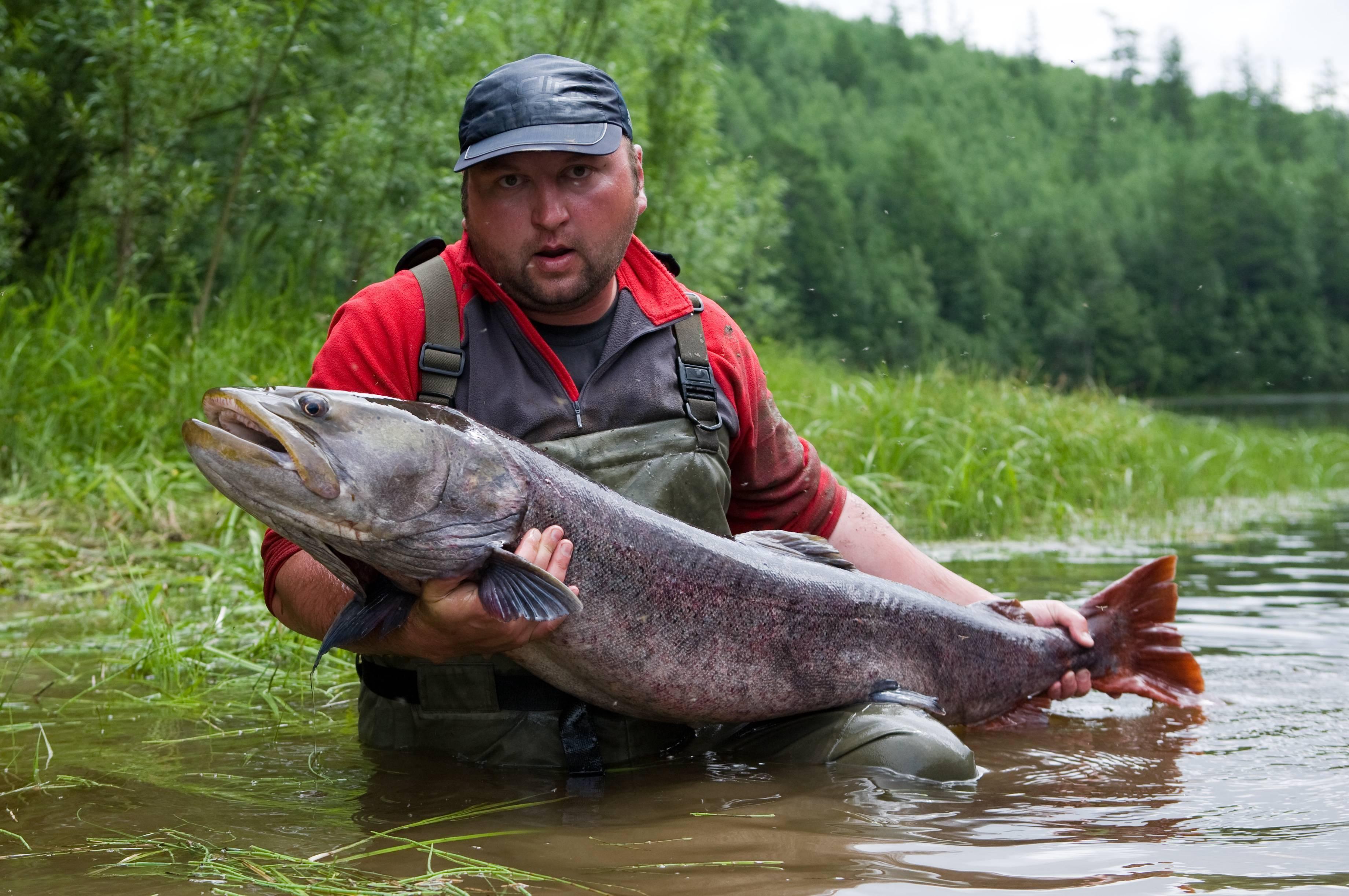 Учимся искать тайменя - спортивное рыболовство