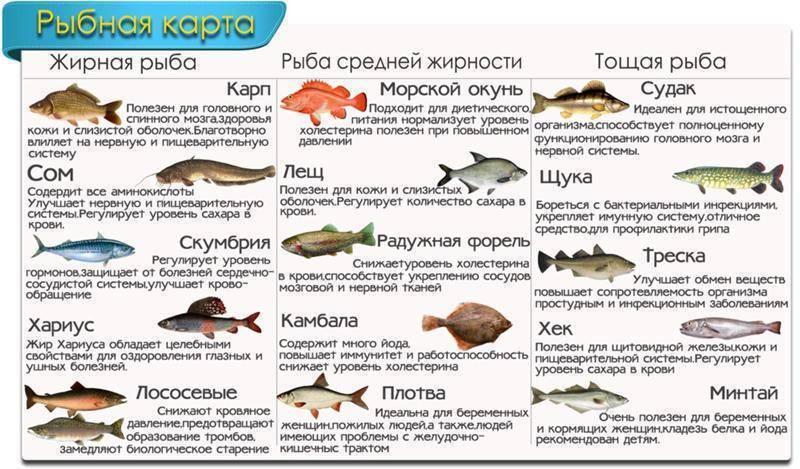 Простипома рыба – википедия