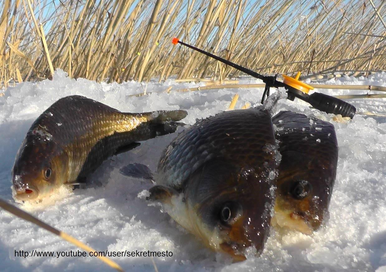 Ловля карася зимой: секреты рыбалки на льду, какие снасти нужны