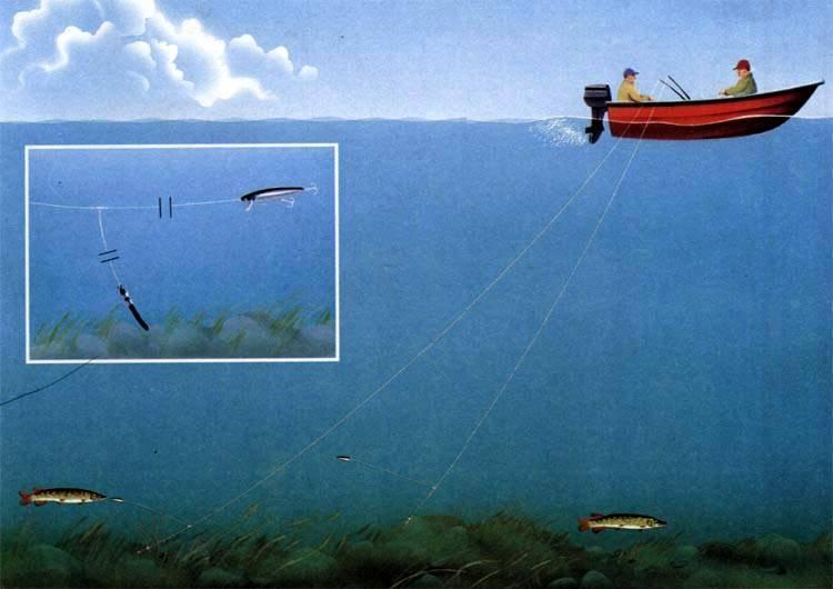 Ловля рыбы на дорожку - щуковые и окуневые