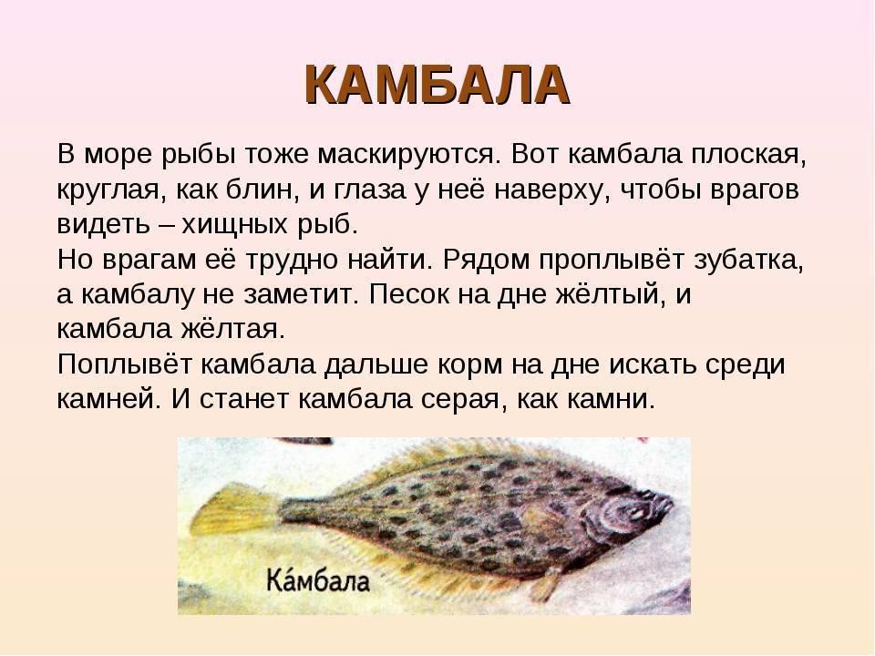 Как спят рыбы и другие обитатели морей