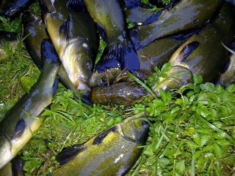 Рыбалка в раково — обзор водоемов, как добраться, контакты и отзывы
