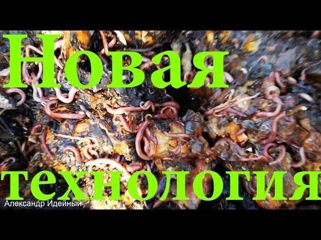 Разведение червей для рыбной ловли или на реализацию дома
