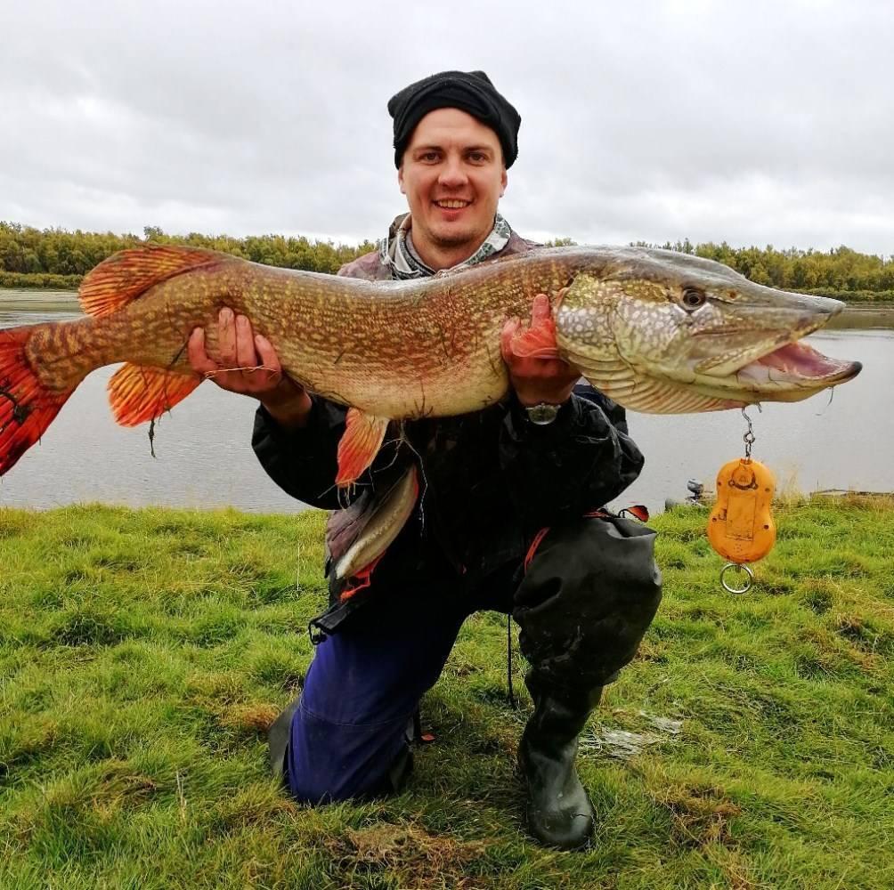 Самая крупная пойманная щука: рекорд лотара луи, другие рекордсмены из разных стран, фото и видео крупнейших уловов