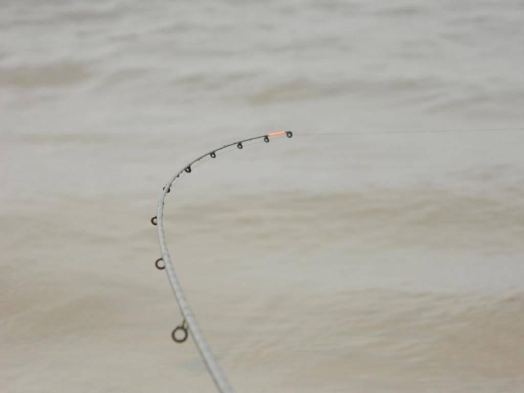 Классификация фидерных удилищ и квивертипов – рыбалке.нет