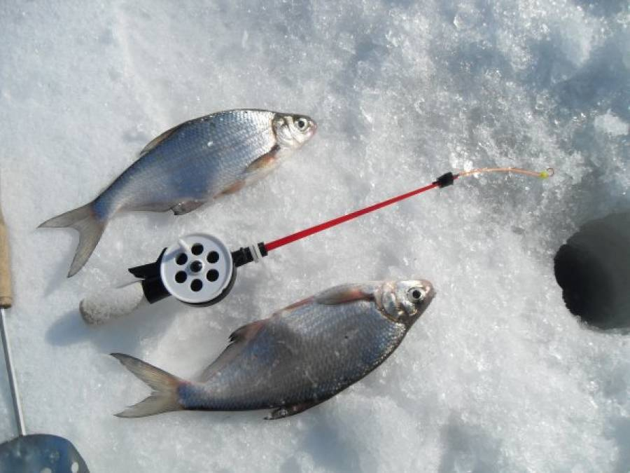 Зимняя ловля леща на черта