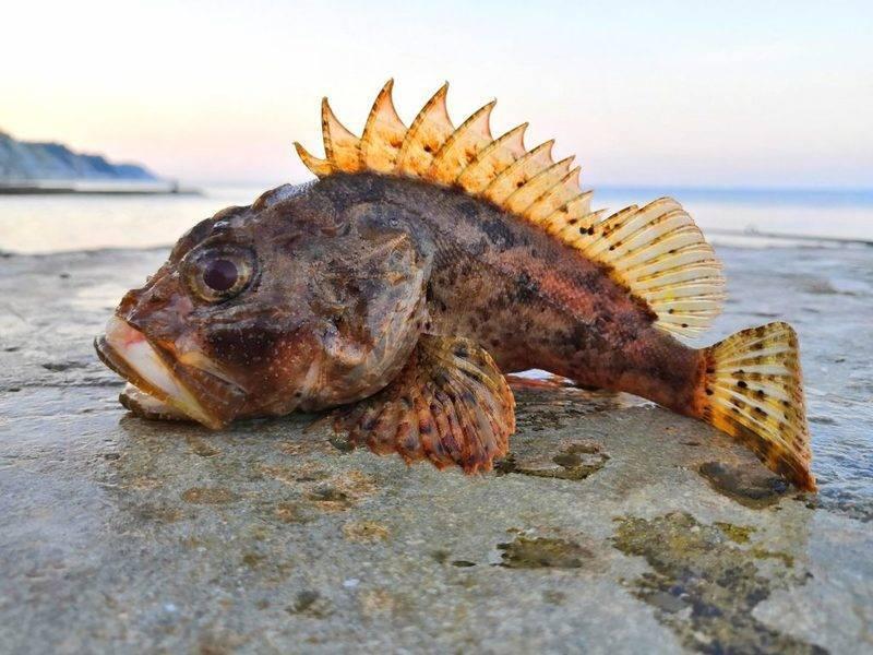 Самые распространеные обитатели черного моря   вся планета