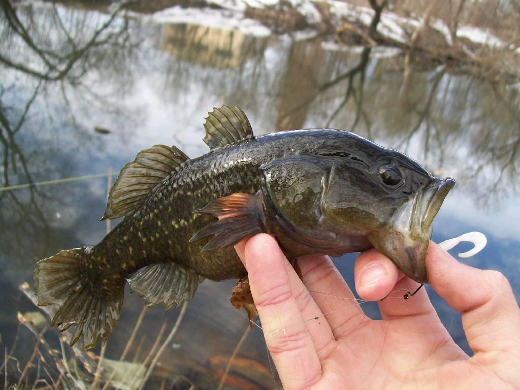 Бычки - рыба морская или речная?