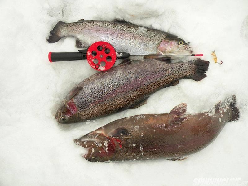 Поздней осенью на «платник» за форелью - спортивное рыболовство