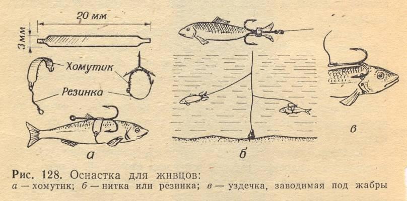 Ловля окуня на живца: осенью и в течении года, выбор снастей