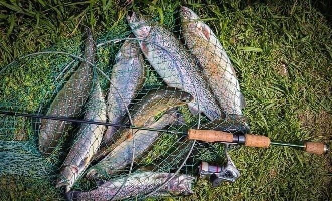 Ловля форели на спиннинг: оснастка, леска и катушка