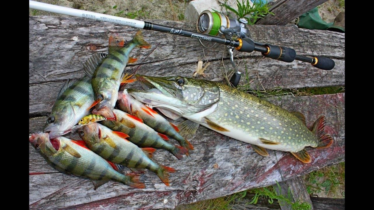 Днепр река - всё о рыбалке на водоеме, для рыбаков города киев.