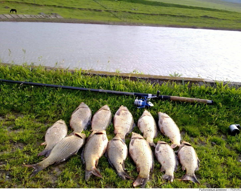 Платная рыбалка в крыму: лучшие озера
