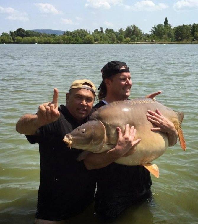 Самый крупный пойманный карп в 21 веке – рыбалке.нет