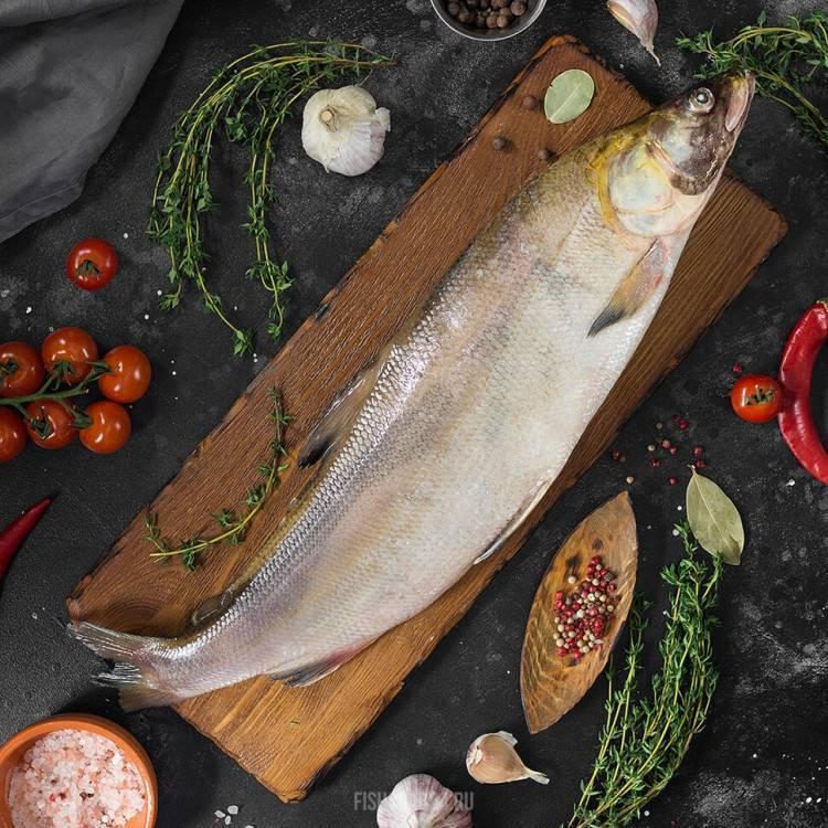 Нельма: состав, польза, вред, противопоказания, калорийность. рыба нельма в кулинарии — рецепты