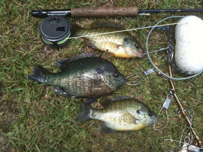 Рыбалка на леща: на что лучше клюет и как правильно ловить