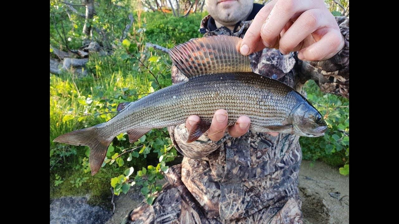 Озерная рыбалка в мурманской области. кумжа и голец - подледный.
