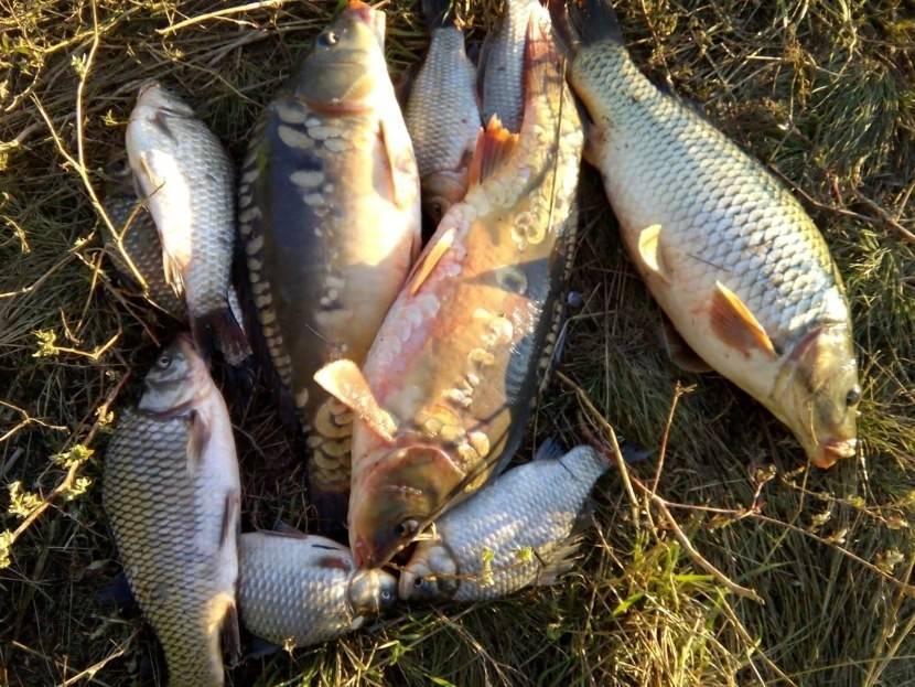 Рыбалка в луховицком районе (г.о. луховицы). форум и отчеты
