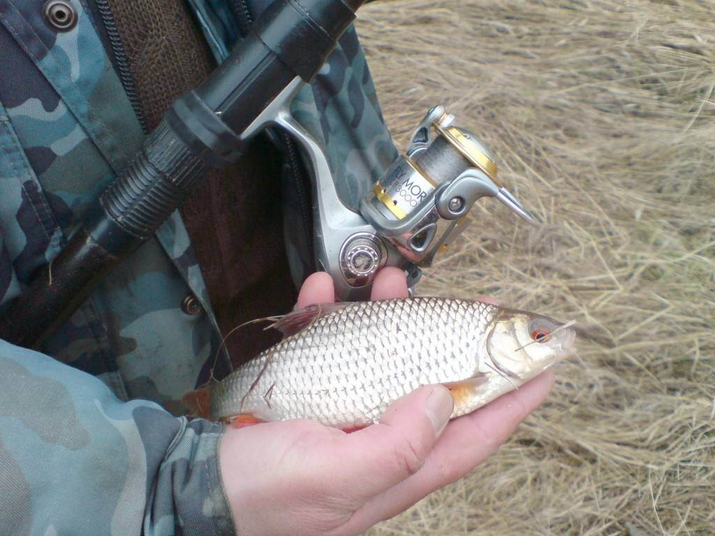 Снасти для ловли плотвы весной, летом и осенью - фидерная снасть и поплавочная удочка