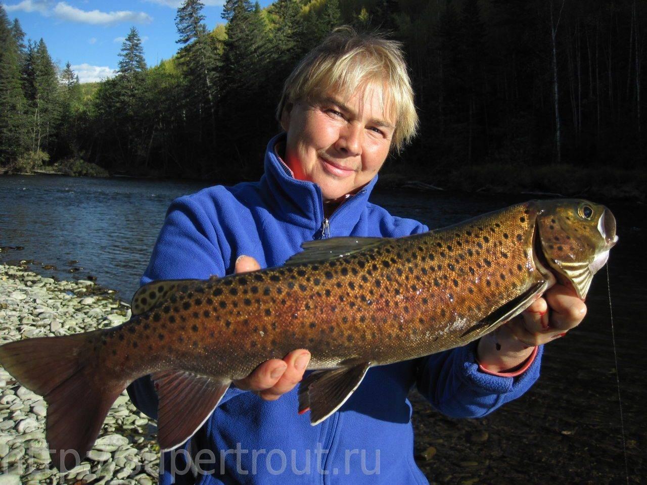 Особенности ловли рыбы ленок и фото с рыбных мест