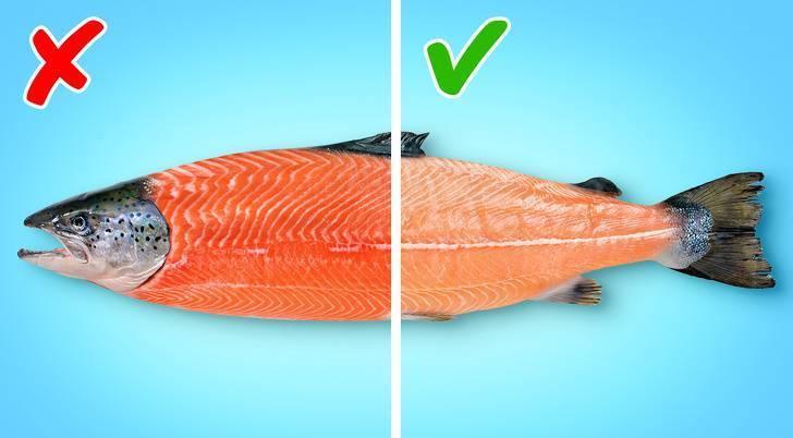 Форель или сёмга: какая рыба лучше, вкуснее и ценнее