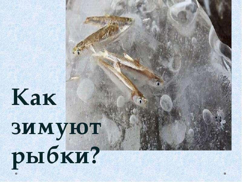 Раки зимой: особенности поведения, содержания и ловли