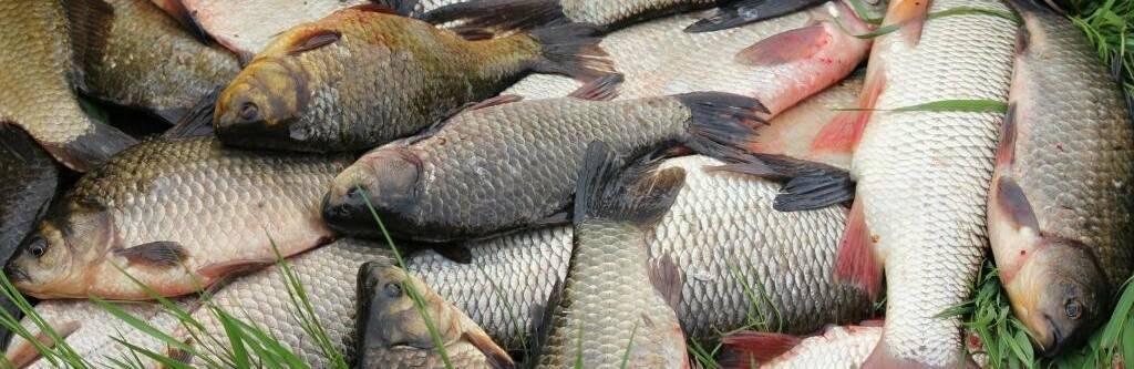Рыбалка на нарских прудах в асаково: лучшие места для ловли, какая рыба водится