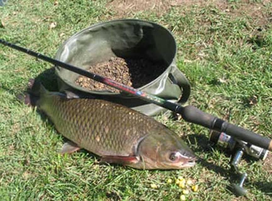 Ловля белого амура – рыбалка зимой, весной, летом и осенью + видео и фото