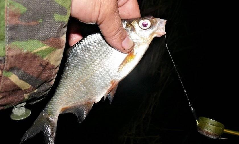 Ловля леща ночью на фидер: правила успешной рыбалки ловля леща ночью на фидер: правила успешной рыбалки