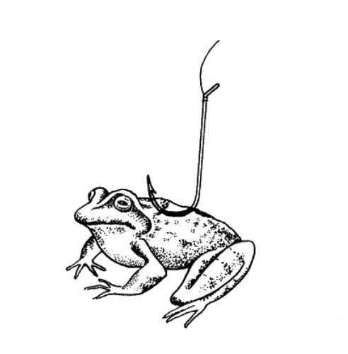Ловля щуки на лягушку-незацепляйку. особенности ловли спиннингом на искусственную лягушку - vobler club - клуб любителей рыбалки