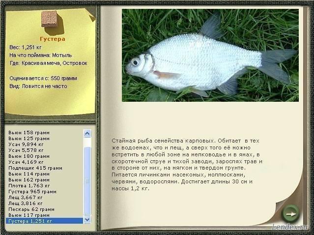 Ловля густеры в августе - читайте на сatcher.fish