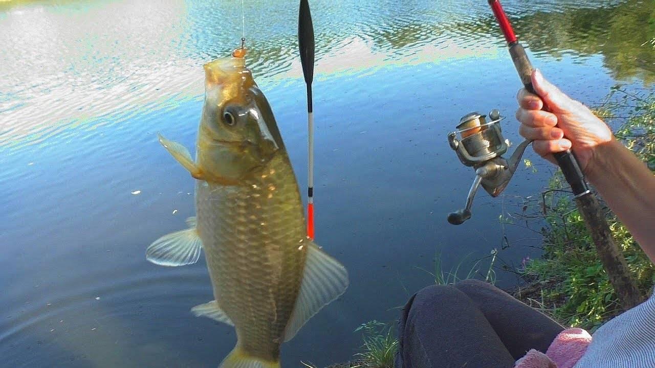 На что ловить рыбу