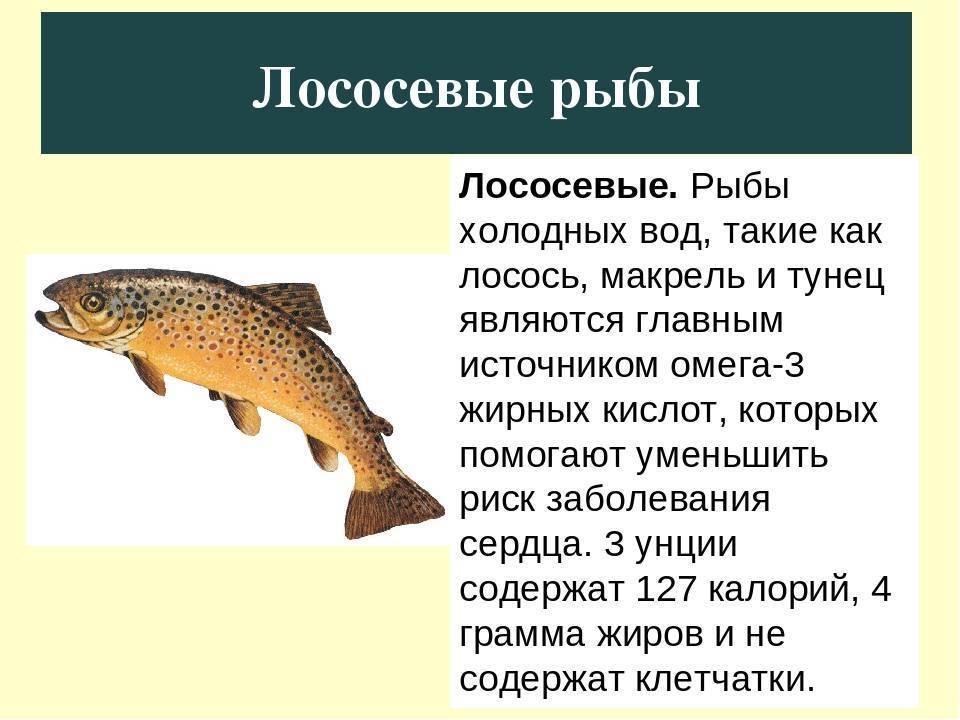 Лососевые виды рыб: описание и хозяйственное значение