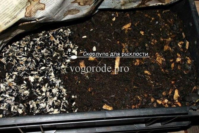 Как развести навозного червя в домашних условиях