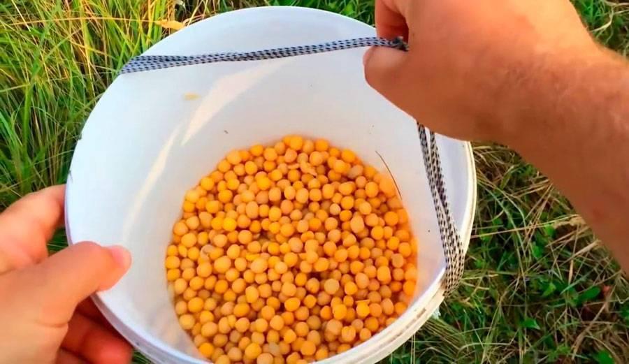 Как варить горох для рыбалки - 3 лучших рецепта