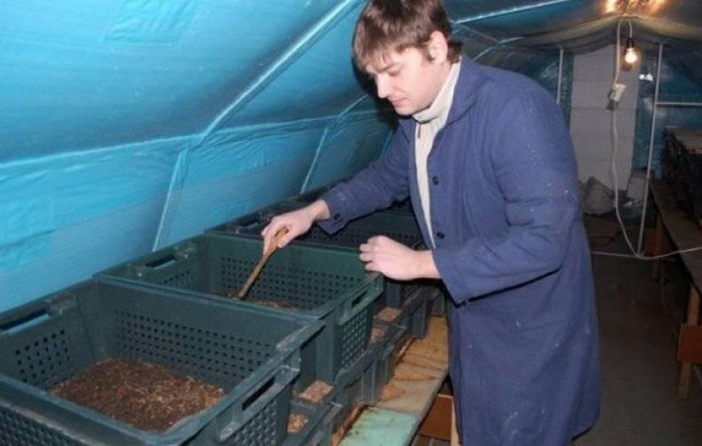 Разведение червей для рыбалки и корма как бизнес-идея