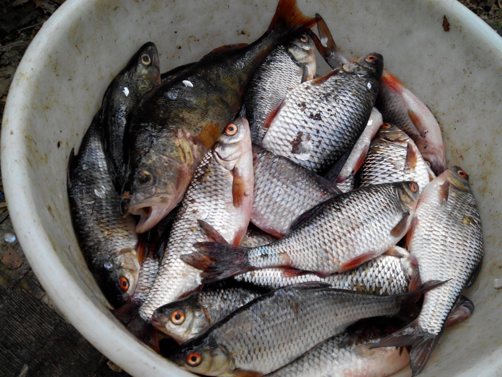 Рыбалка на дону в липецкой области: места, прогноз клева