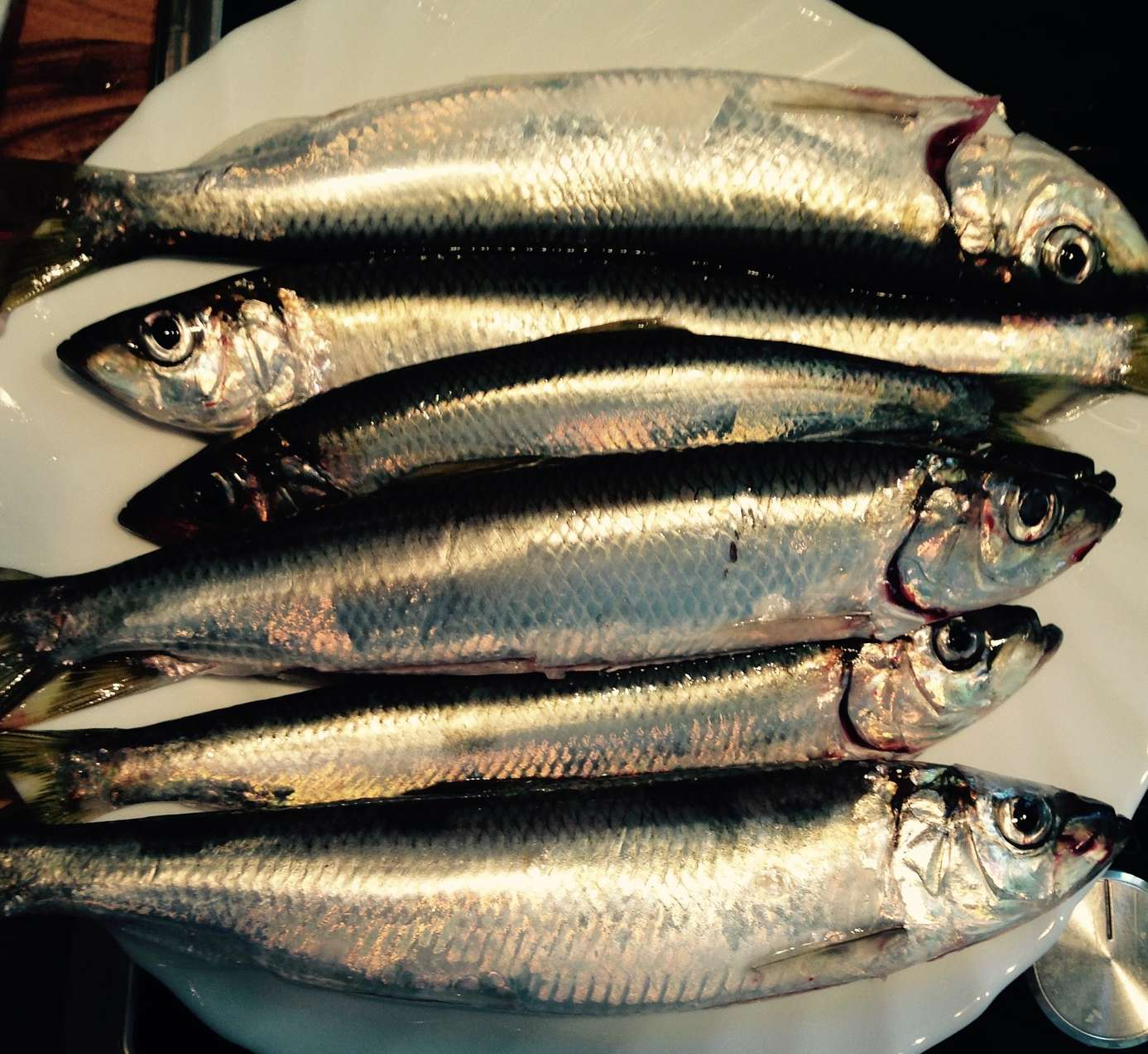 Рыба тюлька: применение, описание видов с фото