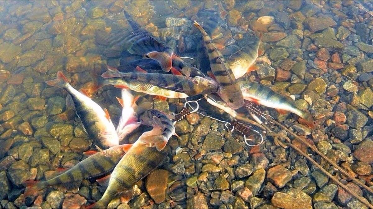 Рыбалка на озере плещеево