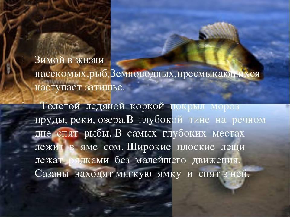 Где искать рыбу зимой - читайте на сatcher.fish