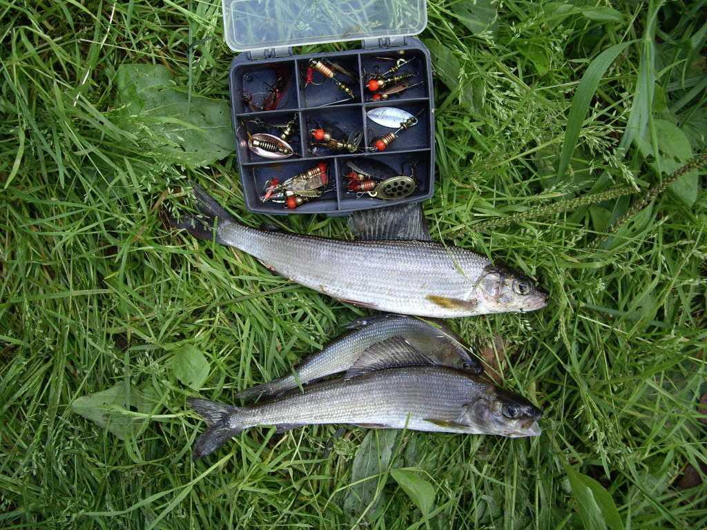 Особенности рыбалки на хариуса зимой